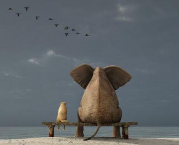 5 Consejos para elegir inmejorables Imágenes para tu web